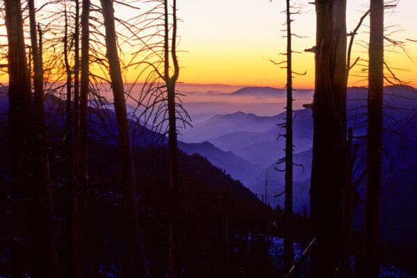 Burned Forest Sunset Yosemite Nation Park