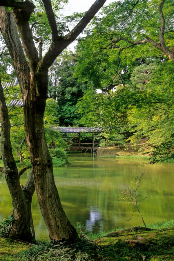 Temple Pond Kyoto Japan