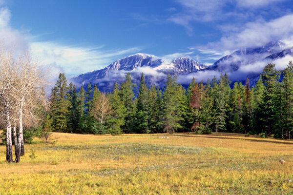 Mountain Meadow, Banff Canada