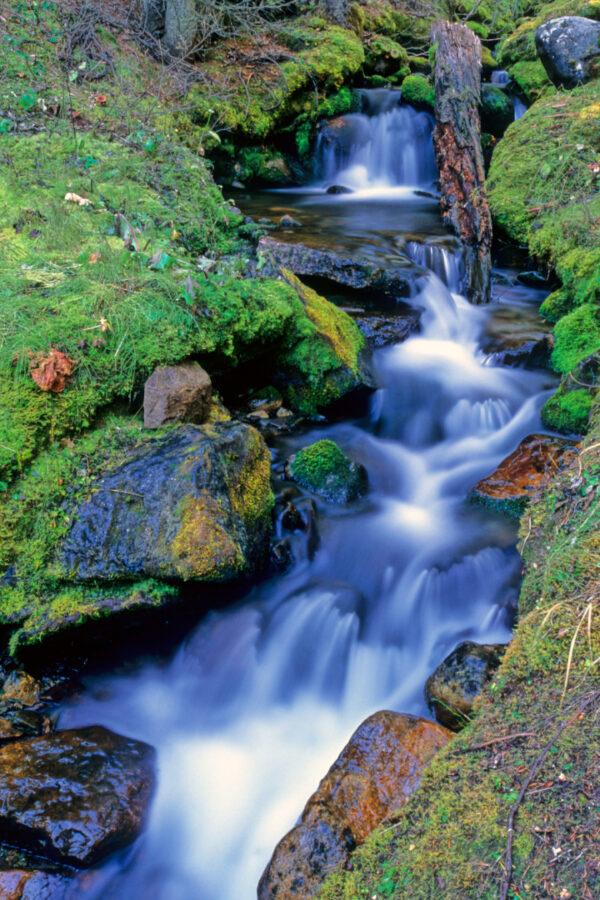 Serein Stream, Northern California