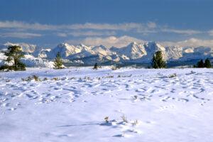 Snowy Meadow Sierra Nevada Mountains, California