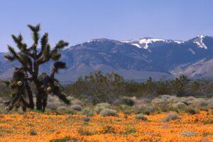 Anza-Borrego Desert Sothern California