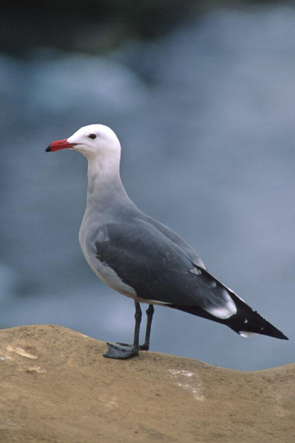 Seagull at the coast
